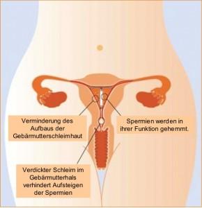 hormonspiral tampon